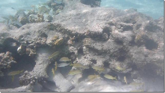 Snorkeling 04.MTS_20120731100056